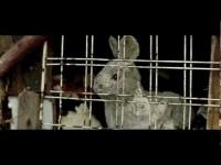 Miuosh - Reprezent (feat.Joka, muz.Minor, scr.Dj Ben) (OFFICIAL VIDEO)